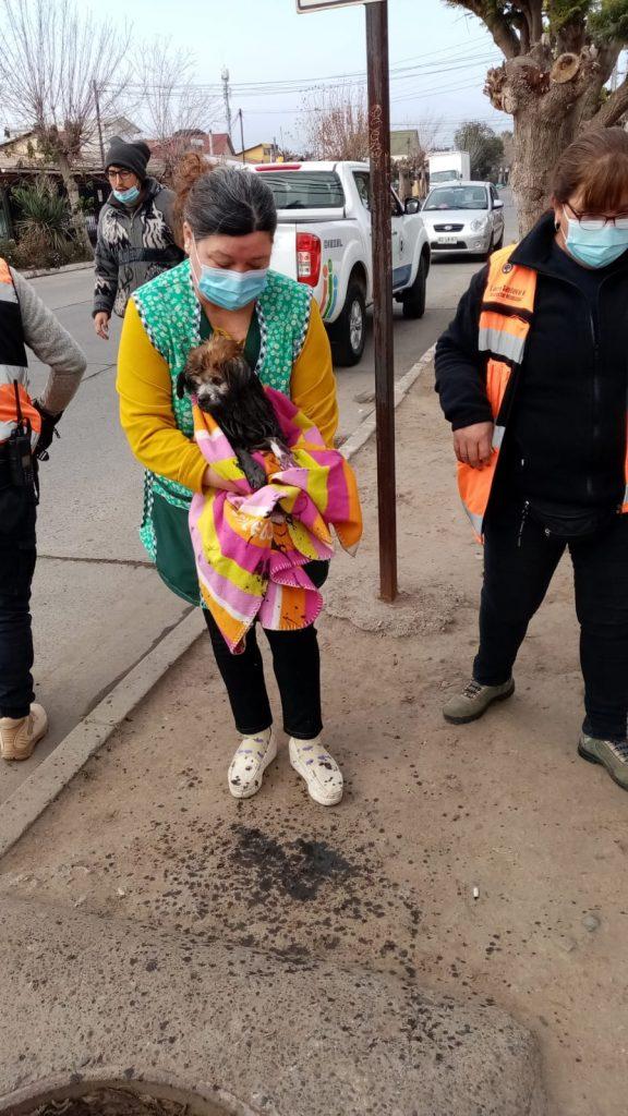 Funcionarios municipales de Quillota rescataron a mascota que se encontraba en ducto de evacuación de aguas lluvias
